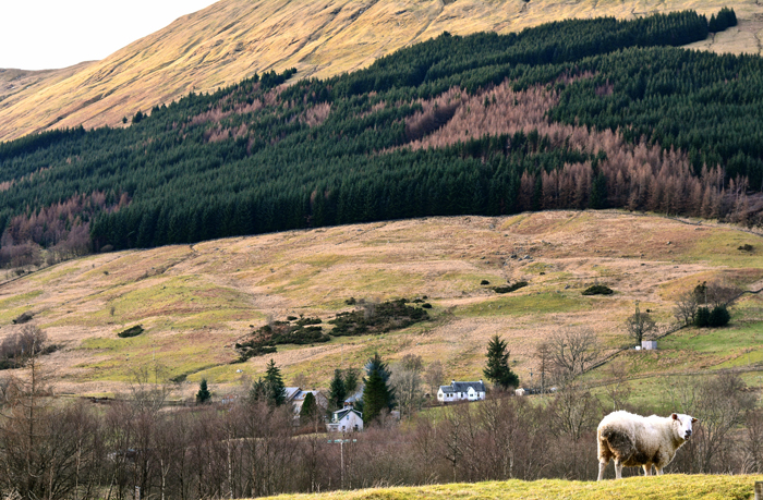ecosse-zazie-maquet-tadam-studio-mhor-84-scotland-hills-bed-and-breakfast-motel05